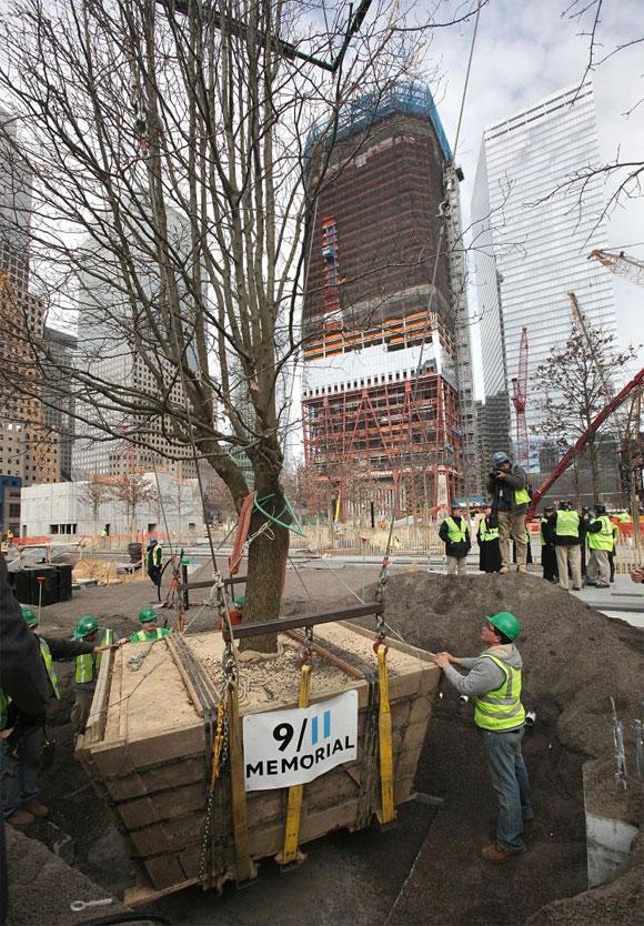 world trade center survivor tree being planted