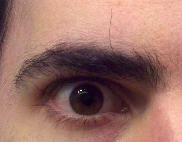 Mark Mushakian giant bushy eyebrow hair