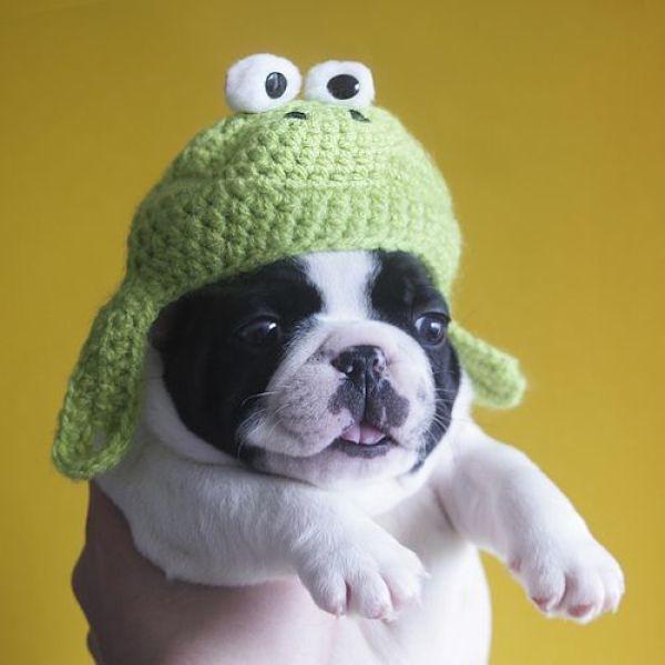 cute puppy in frog hat