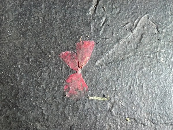 flower embeded in pavement