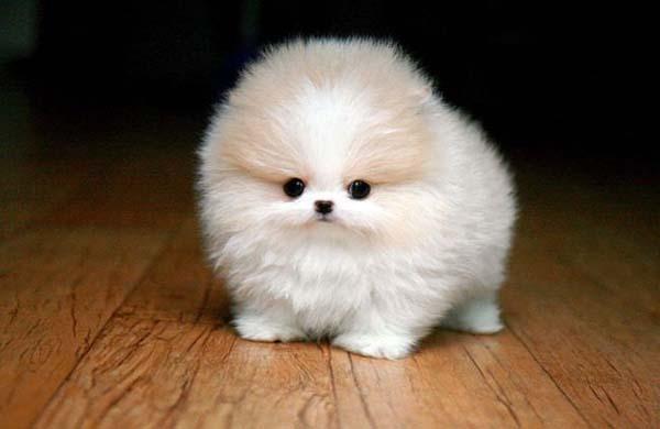 super fluffy cute dog