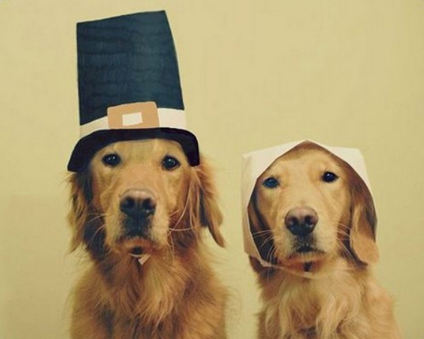 Dogs dressed as Pilgrims for Thanksgiving